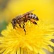 夏季要注意防蜂