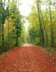 中医:如何去除秋季5种秋燥症