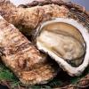 牡蛎用药安神止痛炮制法