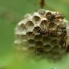 户外旅游注意事项 防范十种虫子有高招