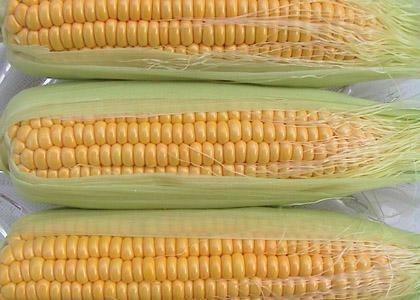 玉米须的药用价值