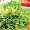 吃些野菜也具有养生食疗功效