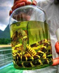 鳗鱼头骨饮料 细数国外民间养生偏