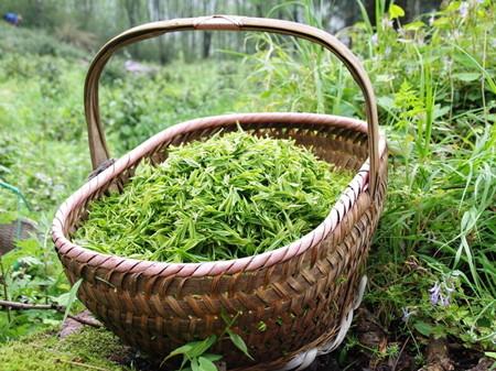 不同季节茶叶的不同特性