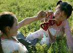 中国端午文化 习俗众多